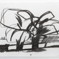 'Trees – Stillingfleet' charcoal on paper 42 x 29.5cm 1981