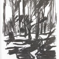 'Tree – Grizedale' charcoal on paper 42 x 29.5cm 1984